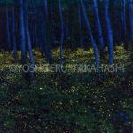 ヒメボタルの森