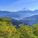 富士山と柚子