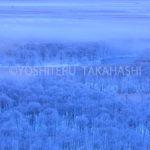 霧氷の釧路湿原