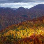 秋の白神山地